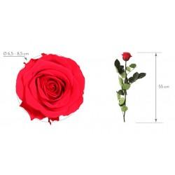 Bouquet Belleza Rosa