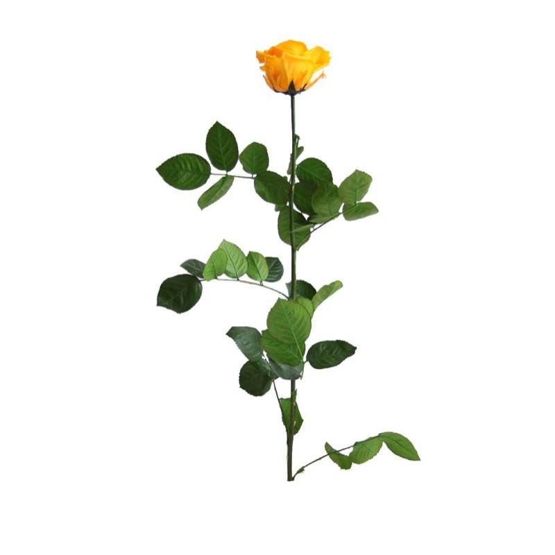 Centro Nacimiento 12 Rosas Rojas