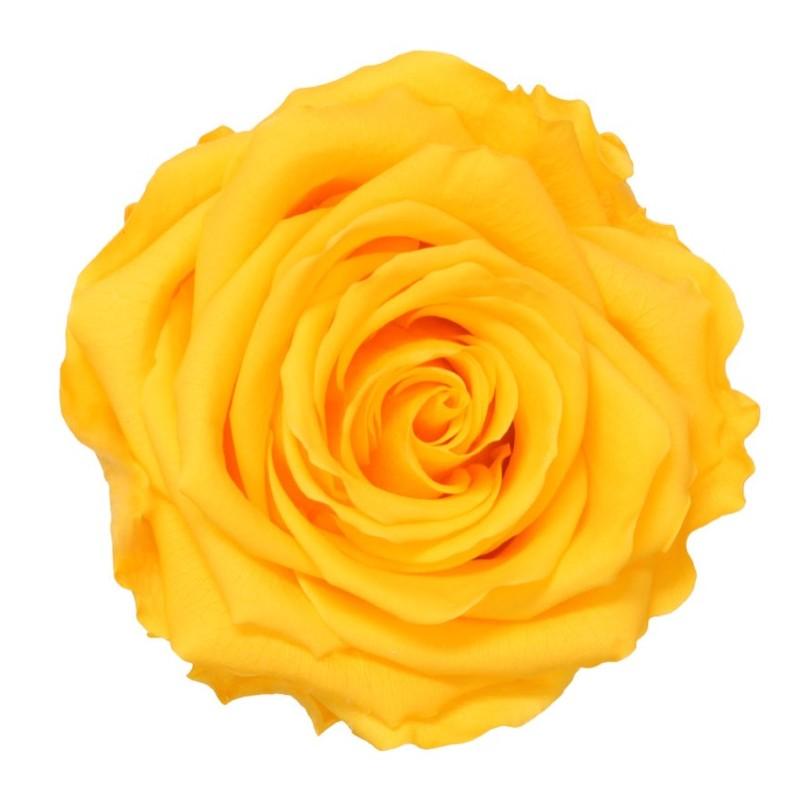 Centro Nacimiento blanco de flor Variada
