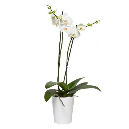 Bouquet Tulipan Mix con Jarrón