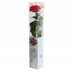 Rosa Eterna Premium en...