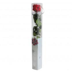 Rosa Preservada en estuche