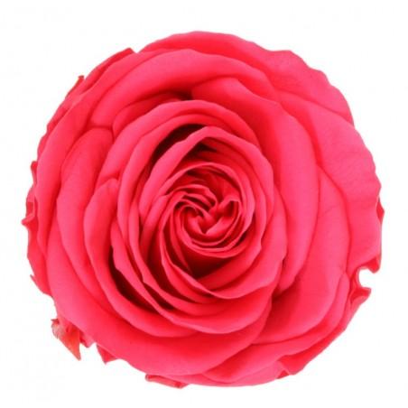Bouquet de 6 Rosas EXTRA PREMIUM. INCLUYE BOMBONES