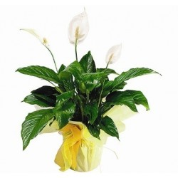 Bouquet Dulce Sorpresa